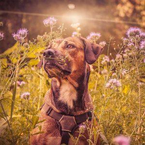 Gamme de produits chien