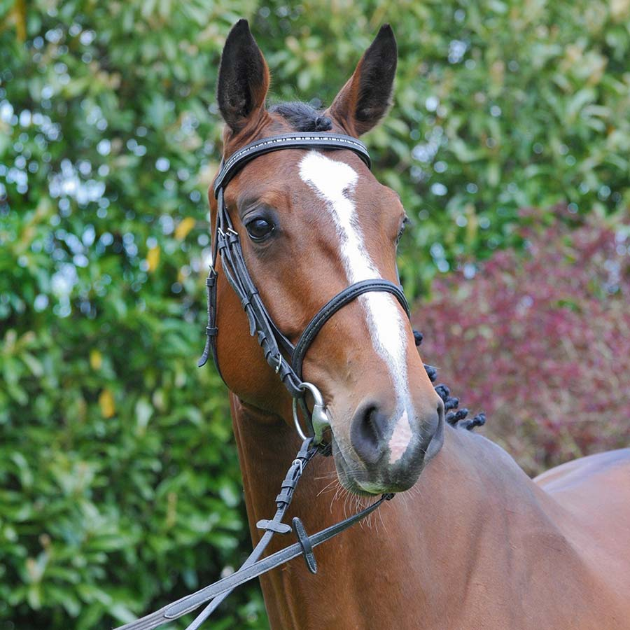 Portrait Pferd cheval horse Vintage